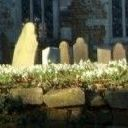 Church Snowdrops